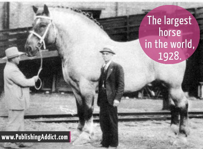 the-largest-horse